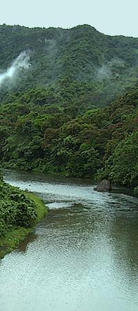 Fiji-rainforest-river-panel-200px